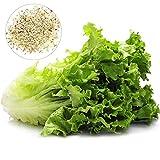 Benoon Salatsamen, 1000 Stück/Beutel Gemüsesamen Garten Römersalat Gemüsesamen Für Zu Hause Salatsamen