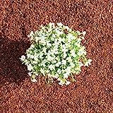 Terra-Discount Premium Pinie 120 Liter (2 x 60 Liter) fein, Körnung 0-5 mm, Pinienrinde, Pinienborke, dekorativer Bodenbelag