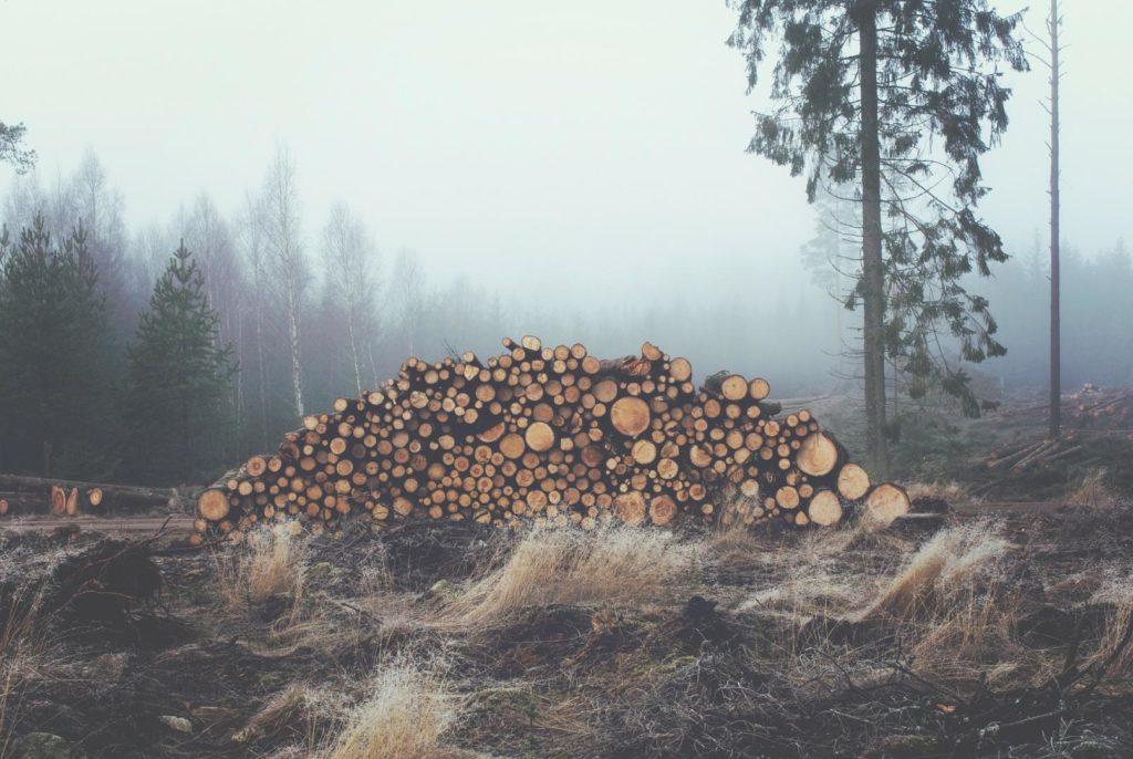 Leistung, Spaltdruck und Holzmenge sind bei der Kaufentscheidung wichtige Kriterien.