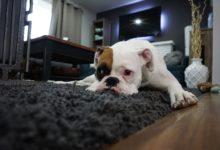 Bild von So werden Teppiche richtig sauber!