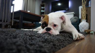 Photo of Teppich säubern: Die besten Tricks