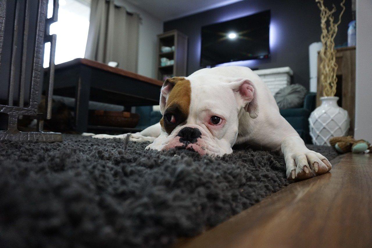 So werden Teppiche richtig sauber!