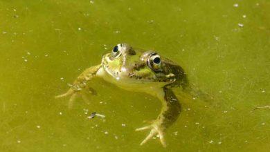 Bild von Algen im Pool entfernen – Hausmittel und Chemikalien