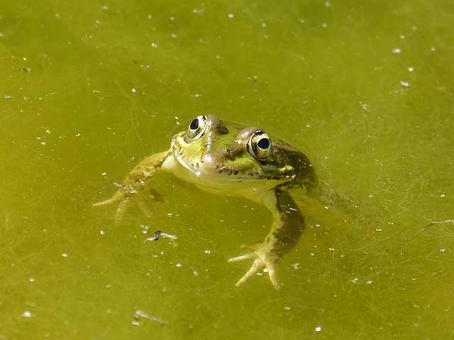 Algen im Pool entfernen