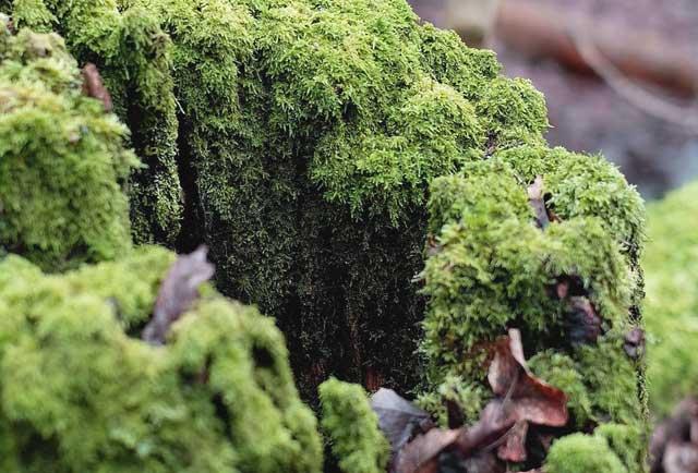 Baumstümpfe entfernen - biologisch abgebauter Baumstumpf