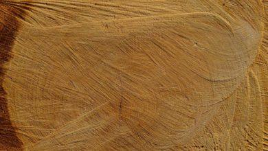 Brennholz Qualität - Wie Sie sehr gutes Holz erkennen und einen vernünftigen Preis aushandeln