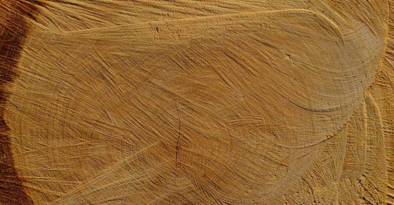 Holzarten Erkennen brennholz qualität bestimmen und den richtigen preis aushandeln