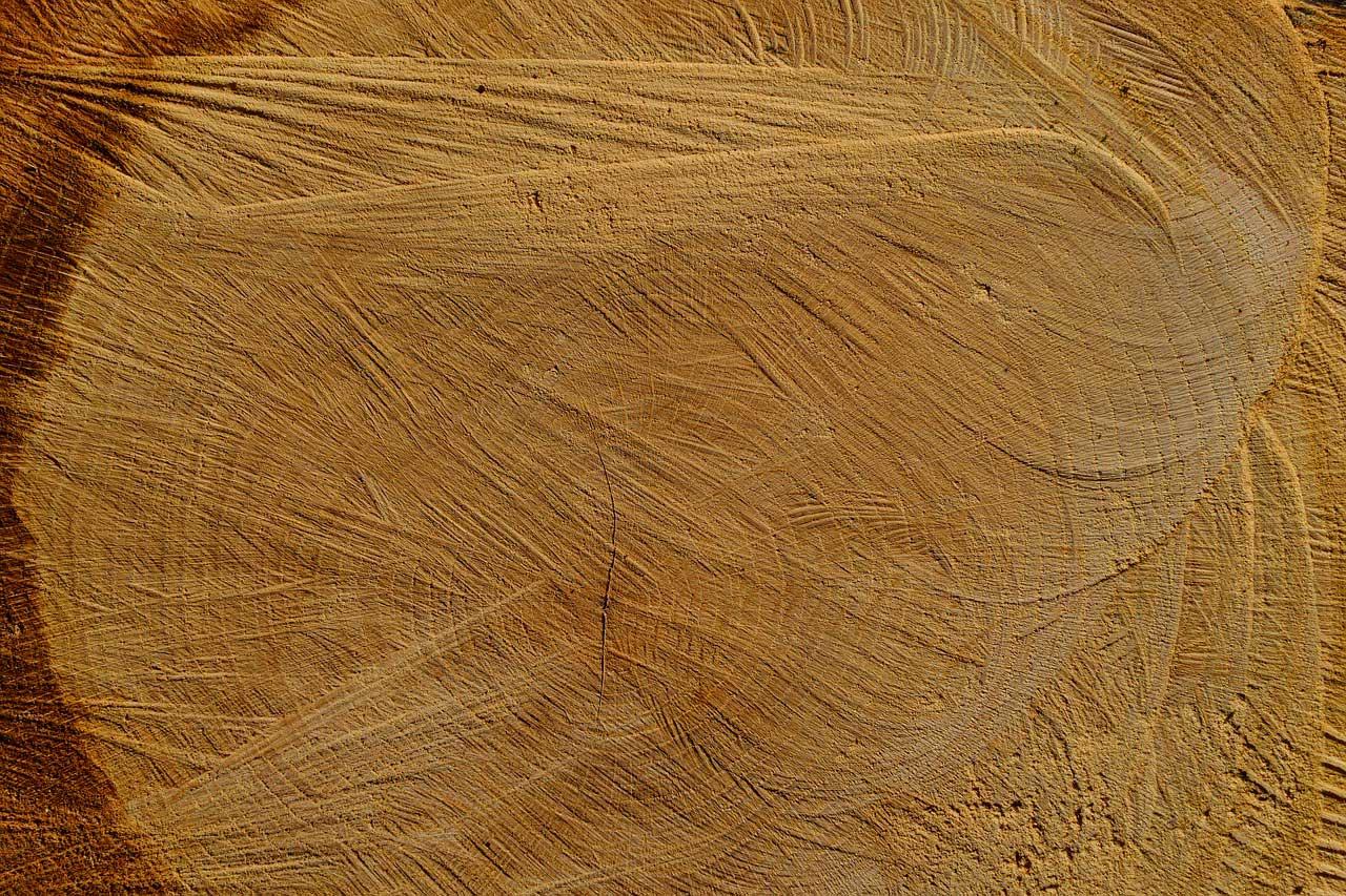 Fabulous Brennholz Qualität - Bestimmen und den richtigen Preis aushandeln US21