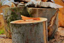 Brennholz richtig sägen