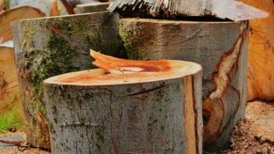 Photo of Brennholz richtig sägen und spalten