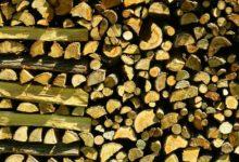 Brennholz richtig trocknen - So klappt's