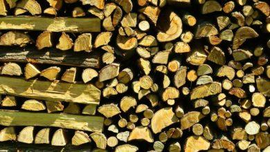 Bild von Brennholz richtig trocknen