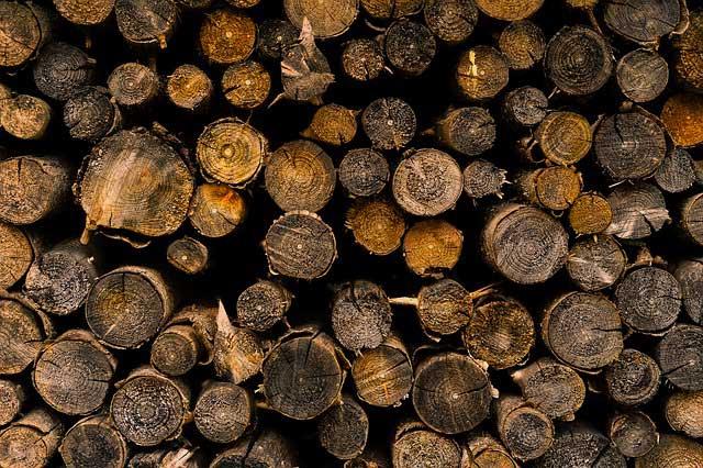 Brennholz richtig trocknen - Feuchtigkeit bereits vorbeugen