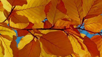 Buchenbrennholz - Das begehrteste Brennholz