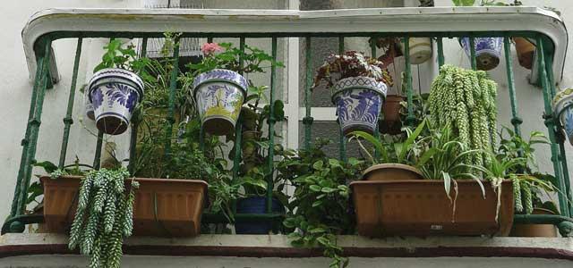 Feuchtigkeitsmesser bei Zimmerpflanzen - auch Pflanzen können vom Schimmel befallen werden.