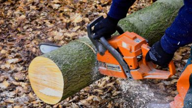 Photo of Holzfällen – so machen Sie es richtig