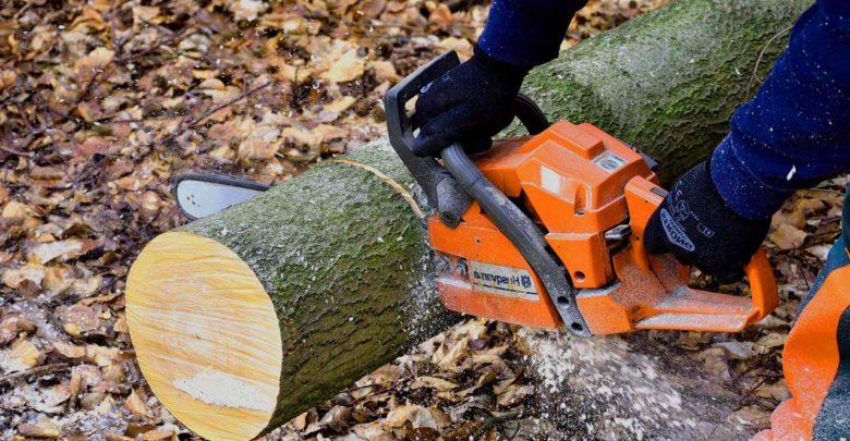 Holzfällen - Wie macht man es richtig