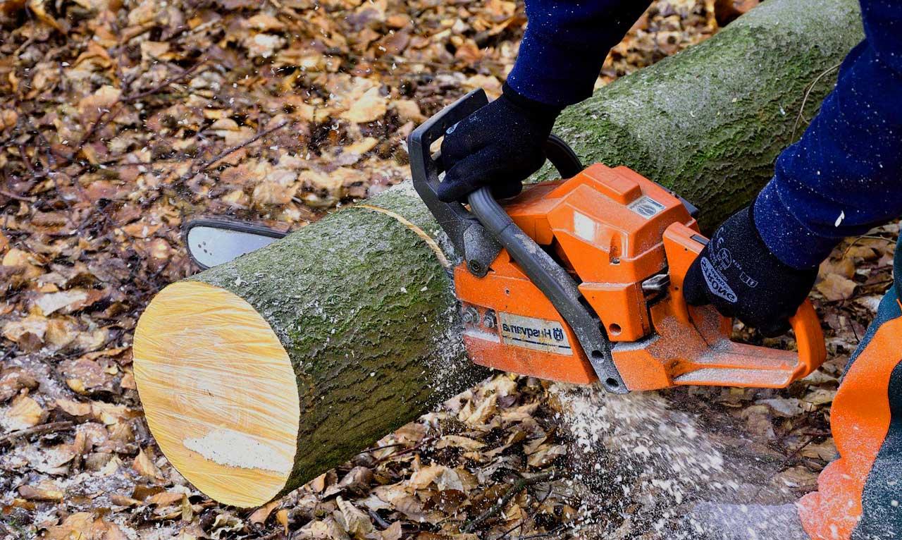 Holzfällen – so machen Sie es richtig