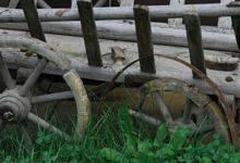 Holzwurm im Brennholz
