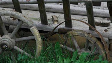 Photo of Holzwurm im Brennholz? Was tun bei Käfer und Ungeziefer?