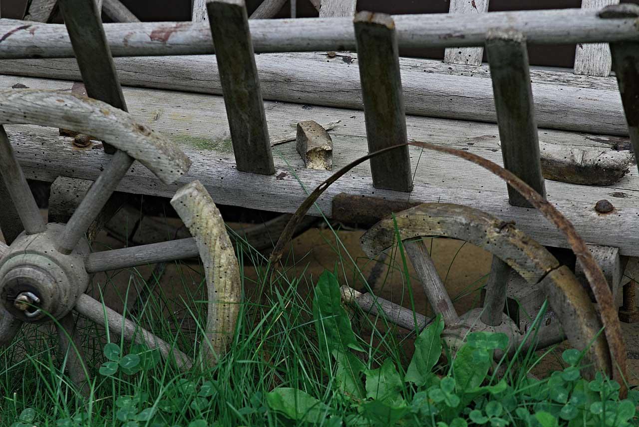 Holzwurm Im Brennholz Was Tun Gegen Ungeziefer Und Schadlinge