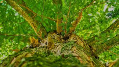 Knüppelholz - Was Sie damit anfangen können