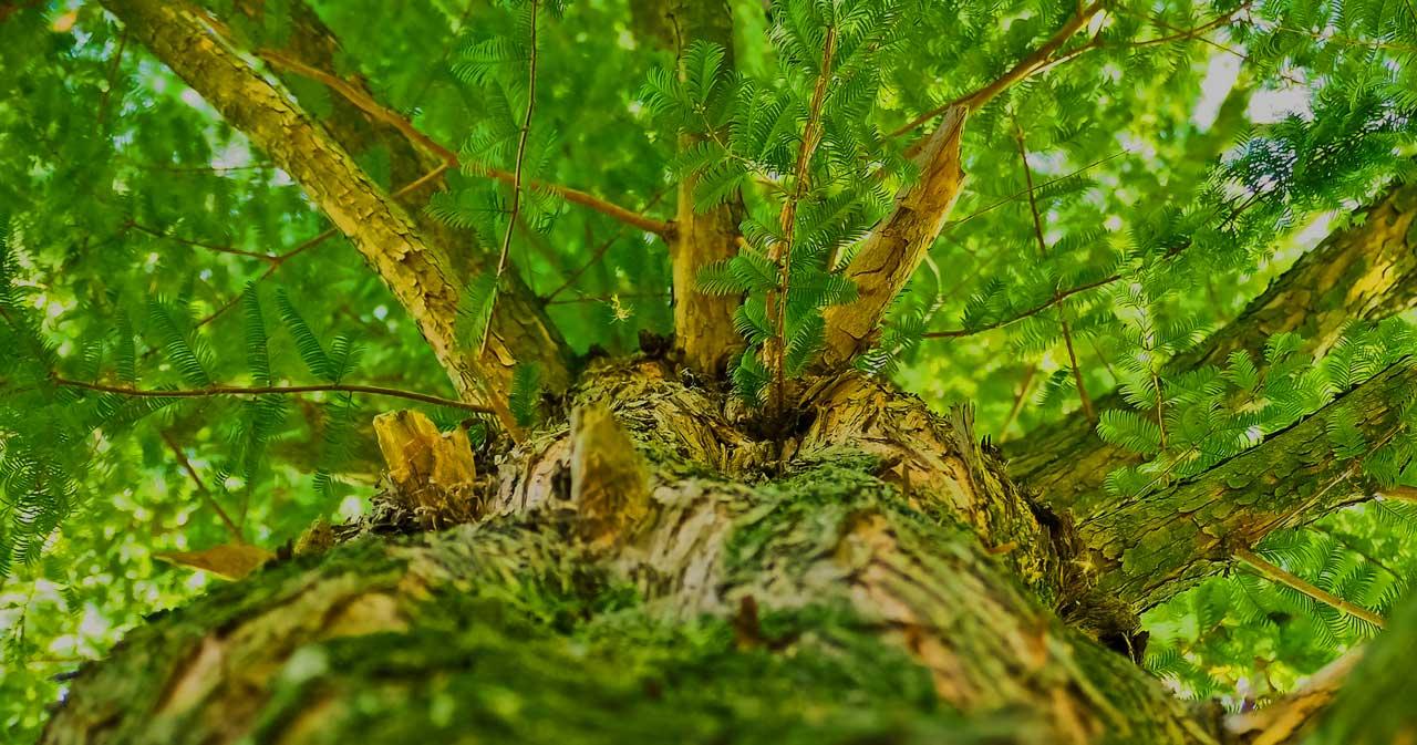 Knüppelholz und Astholz kaufen – Schnäppchen oder Schrott?