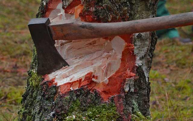 Richtig Holzfällen - In welche Richtung wird der Stamm fallen?