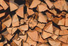 Schimmel im Brennholz - Brennholz Schimmel entfernen oder doch harmlos?