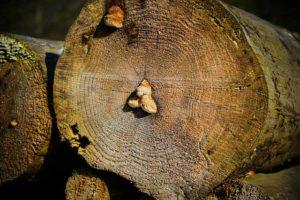 Schimmel im Brennholz entfernen?