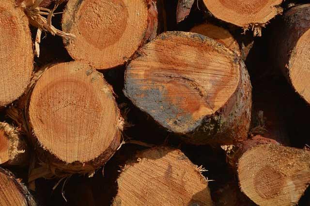 Schimmel im Brennholz - So entsteht der Pilz