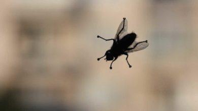 Photo of Schutz vor Insekten in den eigenen vier Wänden: hilfreiche Tipps und Tricks