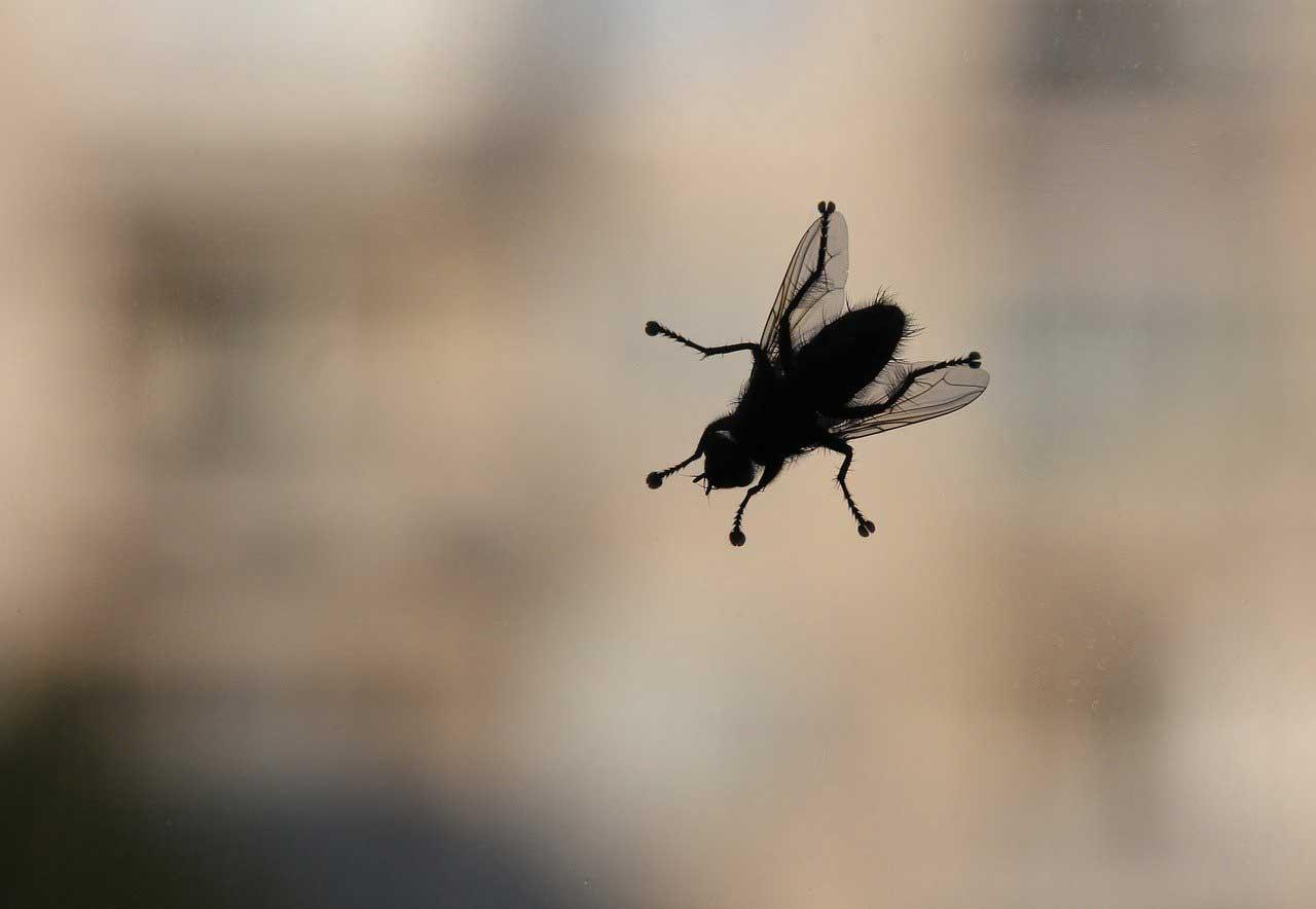 Schutz vor Insekten in den eigenen vier Wänden: hilfreiche Tipps und Tricks