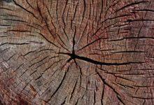 Spezifisches Gewicht von Holz bestimmen - So messen Sie es richtig