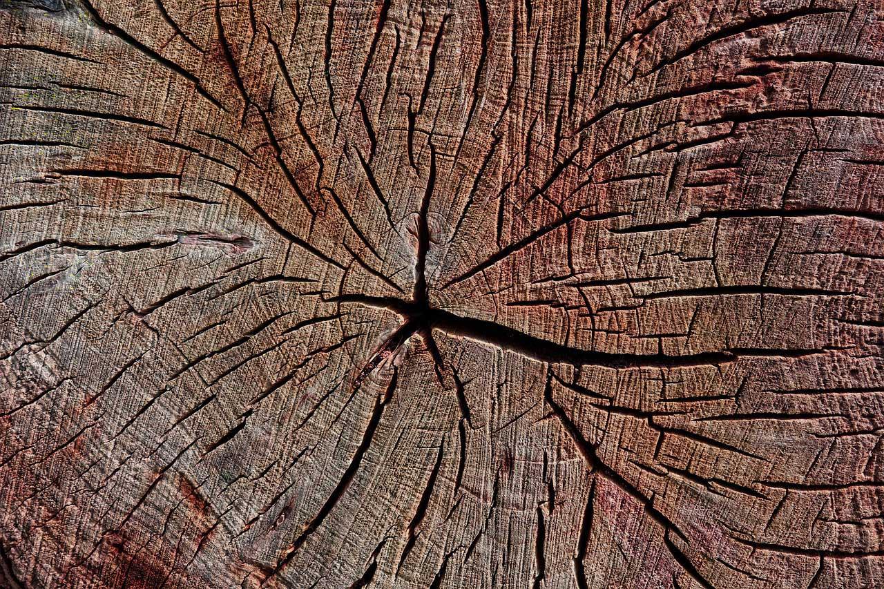 Spezifisches Gewicht von Holz bestimmen