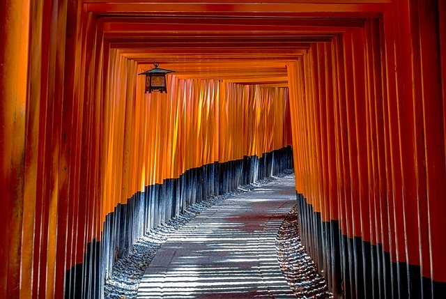 Photo of Japansägen – Ratgeber und Kaufempfehlung